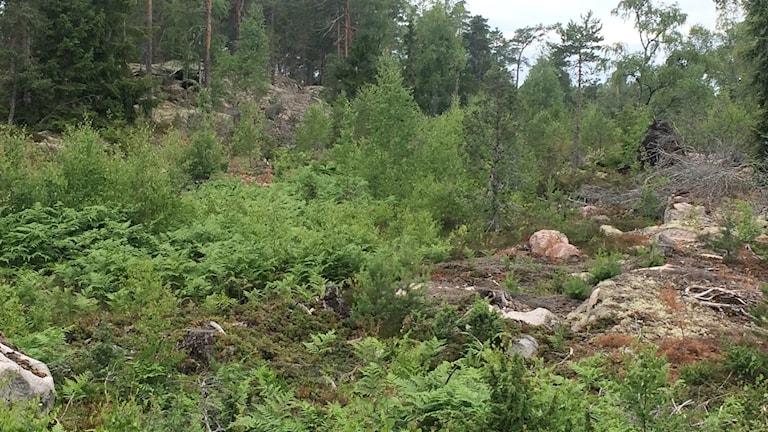 Skog vänge bergtäkt