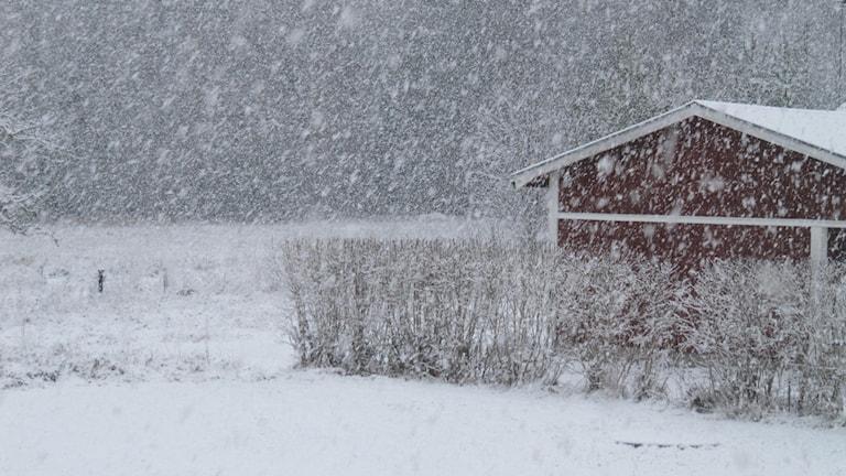 Snöoväder i Östhammar 5 december 2013. Foto: Privat