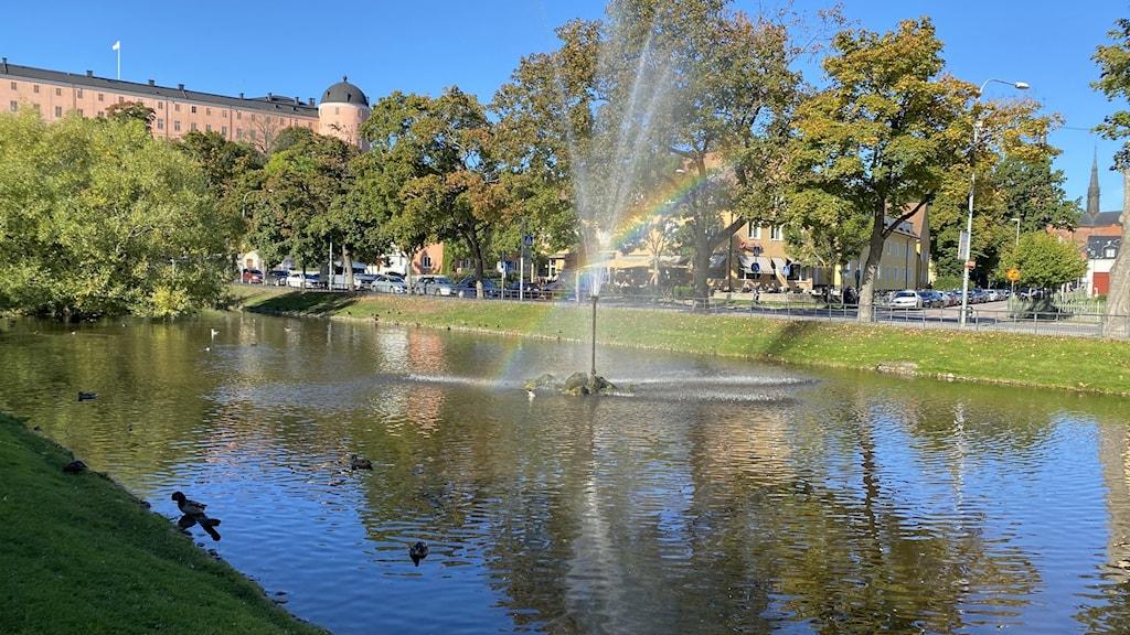 En damm med änder i Uppsala.