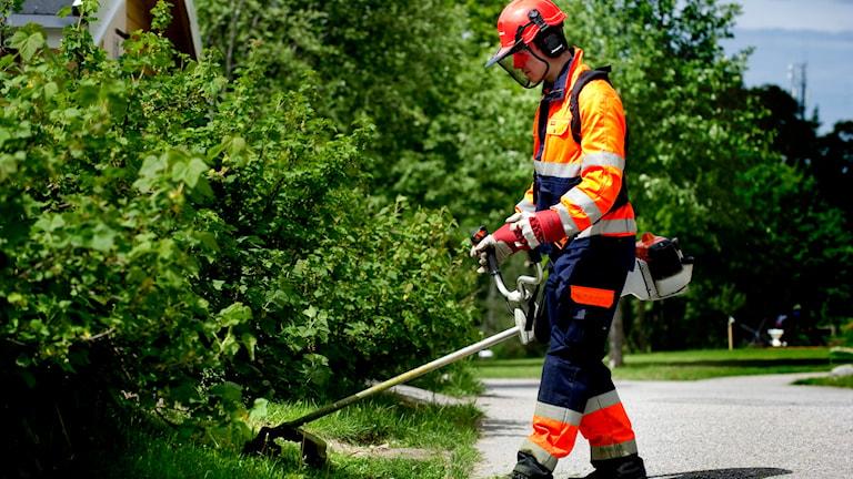 Sommarjobb - kille i arbetskläder med grästrimmer. Foto: Pontus Lundahl/TT
