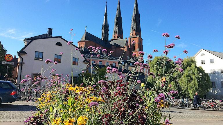 Gamla Torget i Uppsala. foto:Thomas Artäng/Sveriges Radio