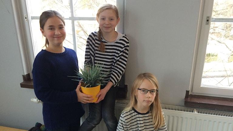 Playlistpanelen med Tora Jennische, Alma Barbier och Ivar Avelin i klass 5B på Bergaskolan i Uppsala. Foto: Mona Wahlund