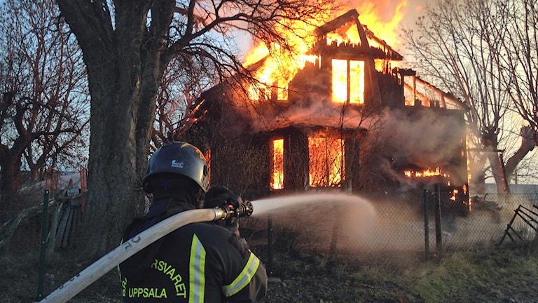Brandman som släcker eld. Foto: Nils Engvall/Sveriges Radio