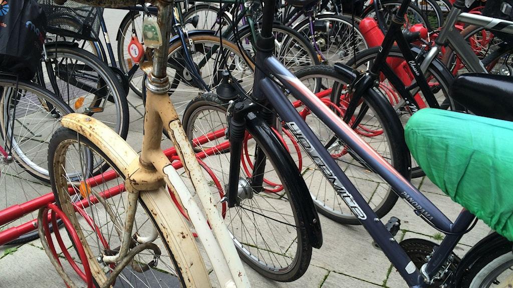 Cykel. Cykelställ. Foto: Mattias Persson / Sveriges Radio
