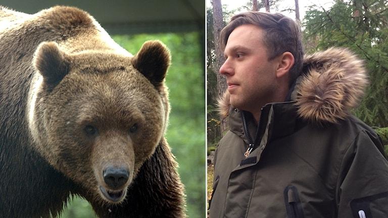 Sebastian Olofsson är rovdjursansvarig på länsstyrelsen.