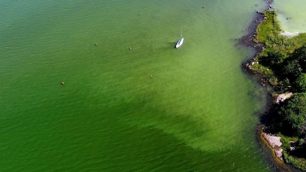 Gulgrönt hav utanför kustremsa.