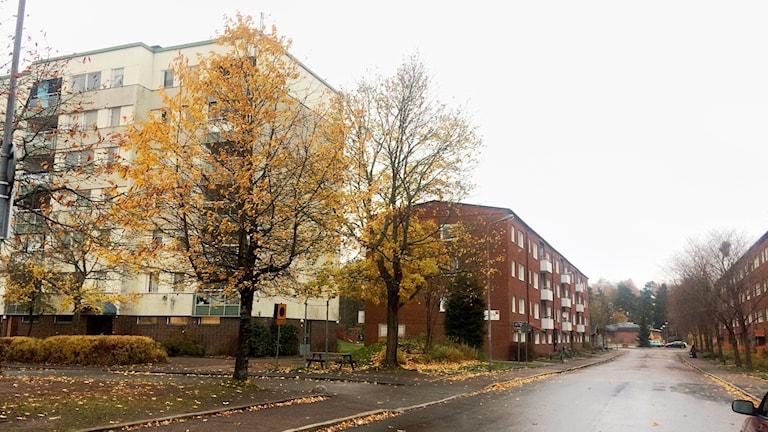 Bandstolsvägen, Valsätra, Uppsala. foto: ulla de verdier