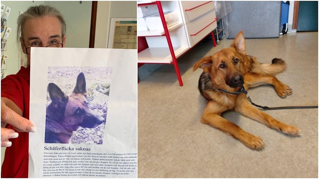 En bild till vänster där en kvinna håller ett papper. Bilden till höger är på en hund som ligger på golvet.