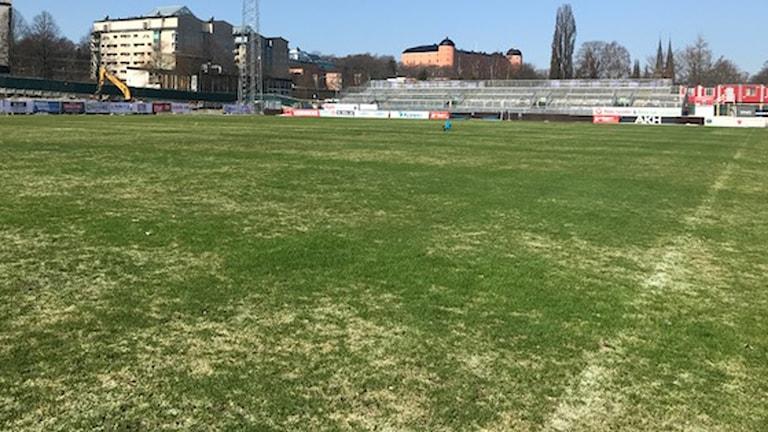 Godkänd gräsmatta på Studenternas i dag.