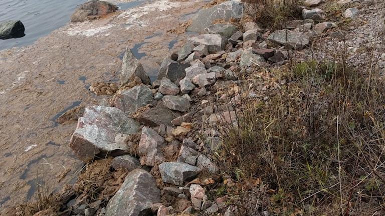 Tallolja på stranden utanför Stora Enso i Skutskär.