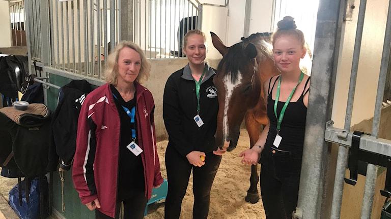 Tre kvinnor står runt en brun häst i ett stall.