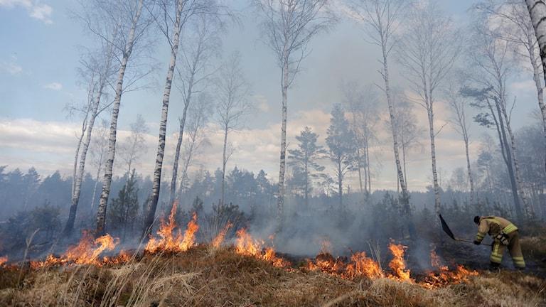 Gräsbränder sprider sig snabbt (arkivbild)