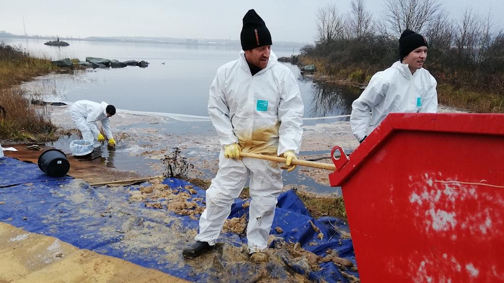 Arbete med att sanera olja, tre personer i vita dräkter tar upp brun massa ur vattnet och skyfflar in det i en röd container.