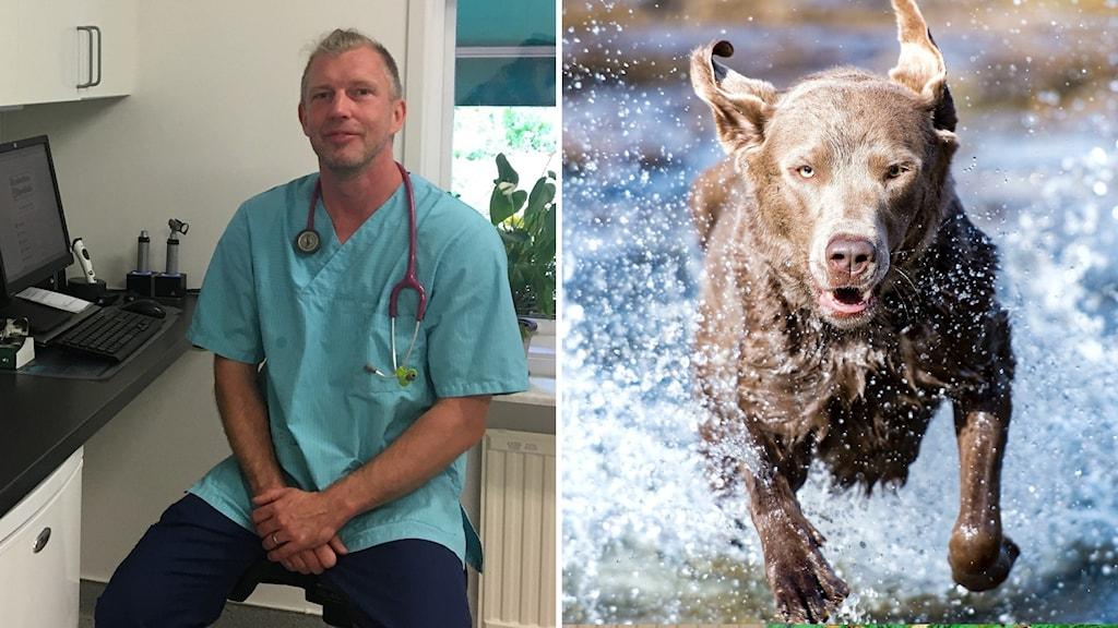 En veterinär på en klinik och en hund som springer i vattnet.