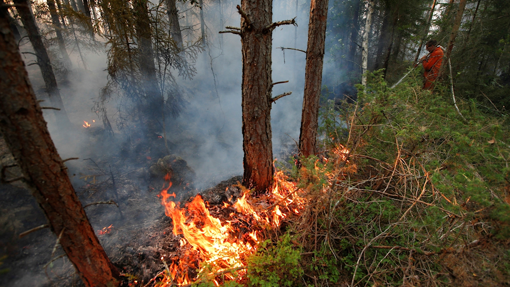 Skogsbrand, arkivbild.