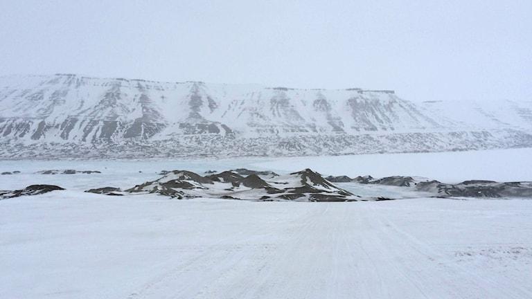 """Vetenskapsradion Klotet: """"I Arktis samlas gifterna"""" Med luft och vattenströmmar sprider sig miljögifter från hela jordklotet till Arktis. På Svalbard tar forskare prover på fåglar för att få en uppfattning om vilka gifter som är i omlopp.  Foto: Pelle Zettersten/Sveriges Radio"""