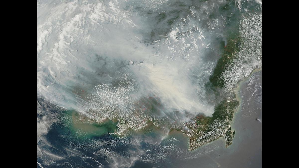 Vetenskapsradion Klotet – Varför brinner det i Indonesien?