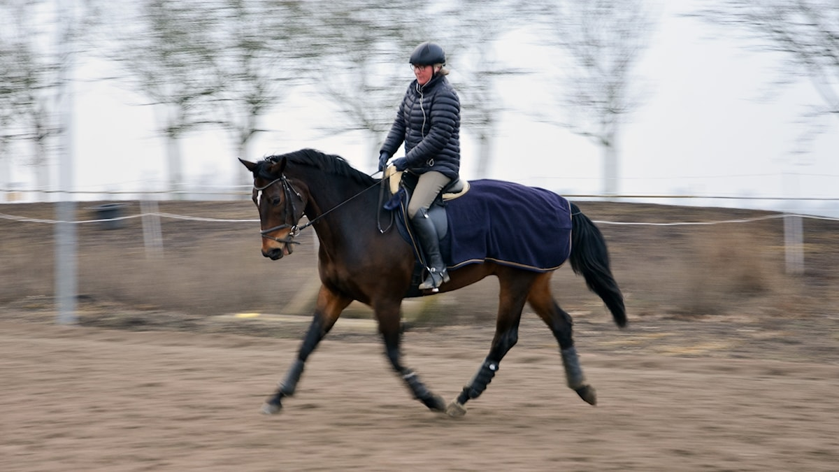 Pyramiden  Nystart  Madeleine Fosse njuter av hästen Bowen efter pensioneringen.  P1 Sveriges Radio