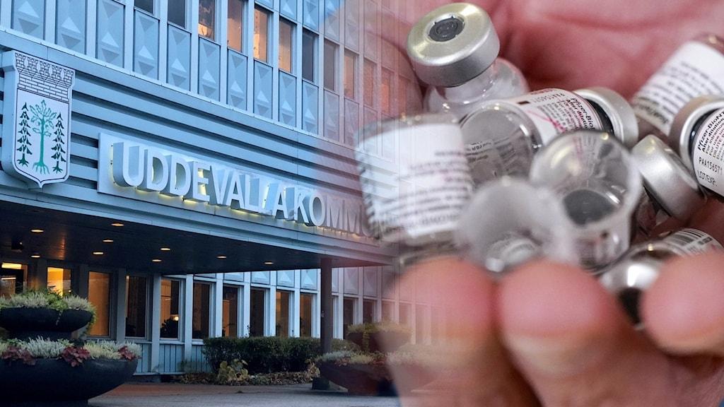 Bildsplitt på kommunhuset i Uddevalla och en hand som håller vaccindoser.
