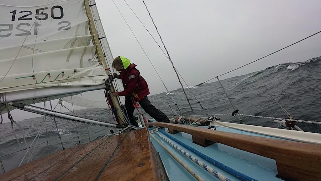 Emma Ringqvist Revar segel.