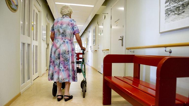 En äldre kvinna med rullator går i en korridor på ett äldreboende. Foto: Jessica Gow/Scanpix