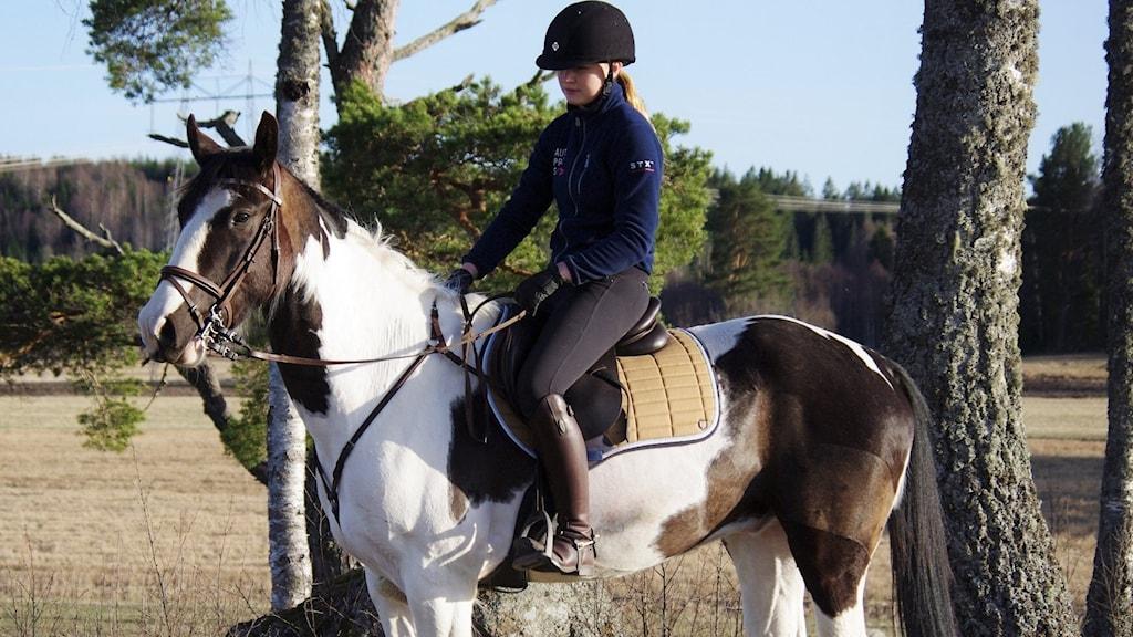 Hästen Bondfire. Kofärgad, fin. På hästen sitter ägaren.