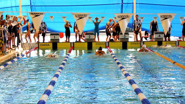 Simmare i bassängen under Uddevalla Sim Open