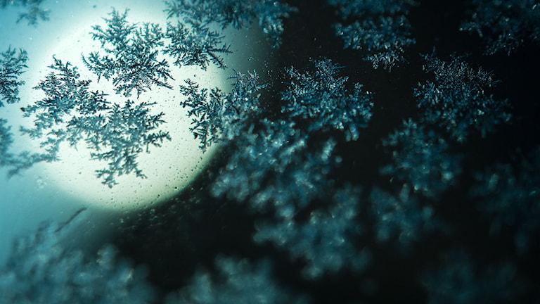 Frost. Foto: David Ebener/TT.