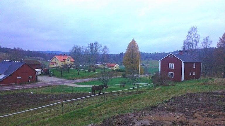Gullungebyn. Foto: Henrik Kärnstål/lyssnarbild