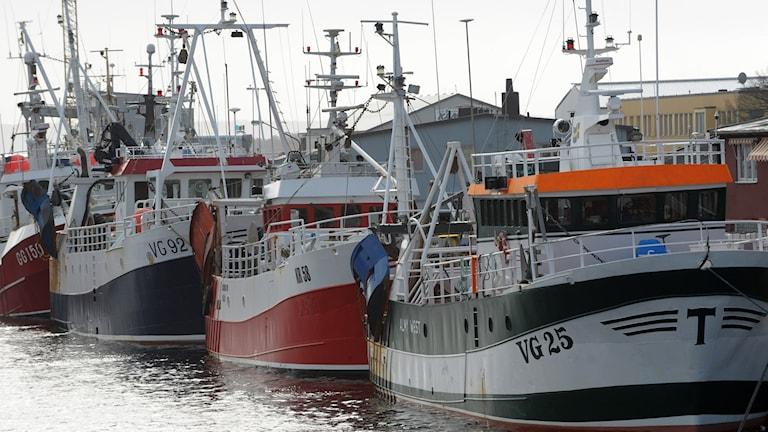 Fiskebåtar. Foto: Lars R Jansson/TT.