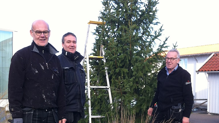 De tre bröderna Nilsson på Gullmarsstrand är just klara med att få upp årets utegran. Foto: Jörgen Winkler/Sveriges Radio.