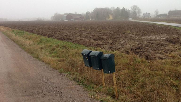 En kilometer från huset, står TTelas brevlådor. Foto: Lisa Lysell/P4 Väst
