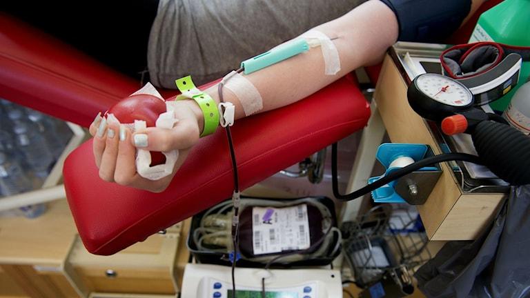 Många blodgivare lämnar återbud på grund av sjukdom. Foto: Jessica Gow/Scanpix.