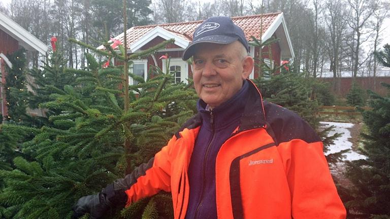 överflöd av julgransproduktion