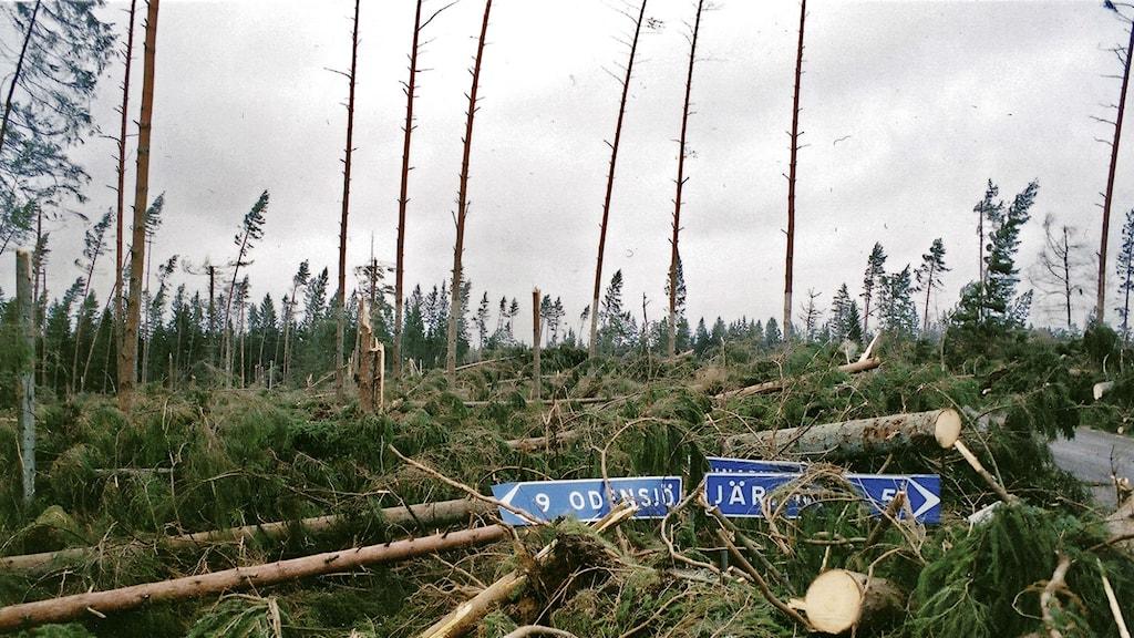 Arkivbild från stormen Gudruns hräjningar med många fällda träd.
