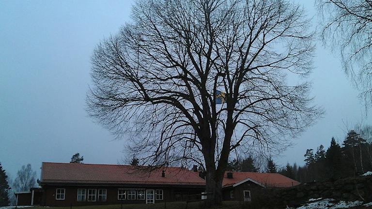 Bild på symbolträdet i Dals-Långed