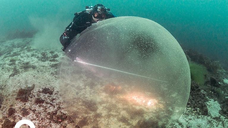 En dykare bakom en enorm geléboll.