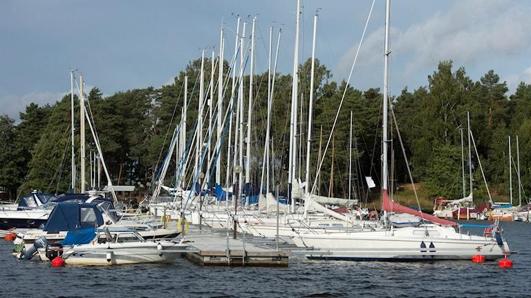 Fritidsbåtar i en gästhamn. Foto: Fredrik Sandberg/TT.