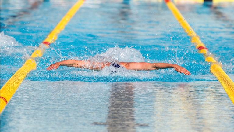 Simmare i bassäng. Foto: Thérese Ny/TT