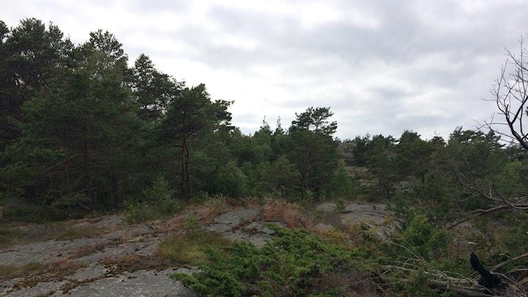 Utkiksberget på Skaftö. Foto: Skoob Salihi/Sveriges Radio