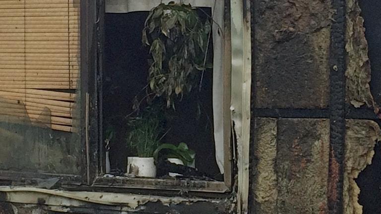 Fönstret i ett svartbränt hus foto: susanne nobel/sveriges radio