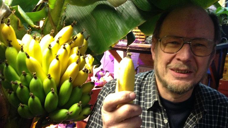 Bild på Bernt Olsson med egenodlad banan.