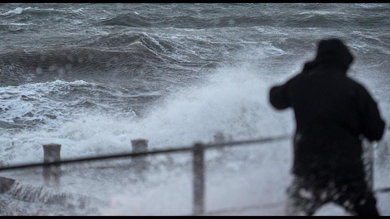 En man kastar sig undan en våg. Foto: Johan Nilsson/TT.