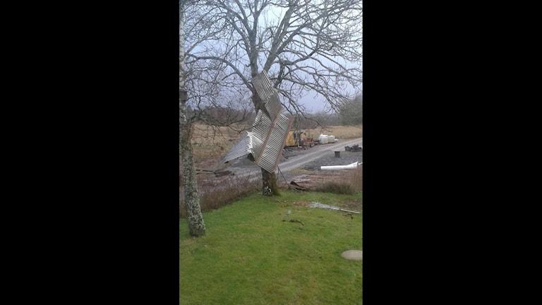 LYSSNARBILD. Ett plåttak har blåst loss och fastnat i en trädkrona på Orust.