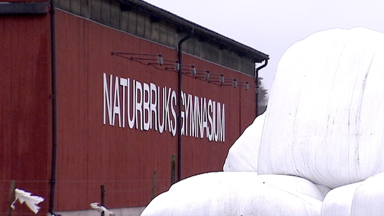 Nuntorp naturbruksgymnasium. Foto: Jakob Eidenskog/SVT.