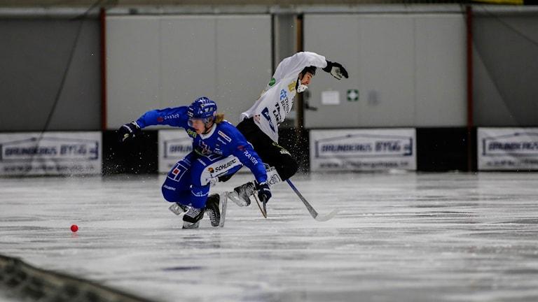 Bandy IFK Vänersborg-Gripen Felix Persson