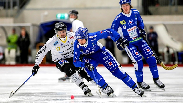 Bandy IFK Vänersborg-Gripen Tobias Wireby/Sveriges Radio