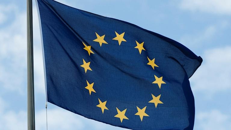 EU:s flagga vajar i vinden mot blå himmel. Foto: Henrik Montgomery/TT