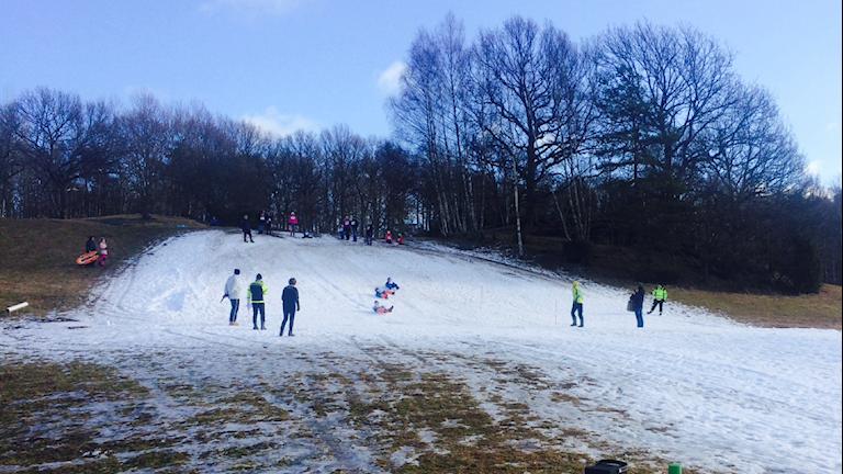 Barn åker pulka ner för backen i Sanders dalar i Uddevalla. Sportlovsaktiviteten Rumperally.