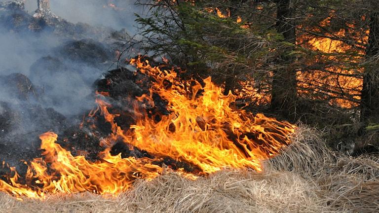 Gräsbrand SMHI Arkivbild